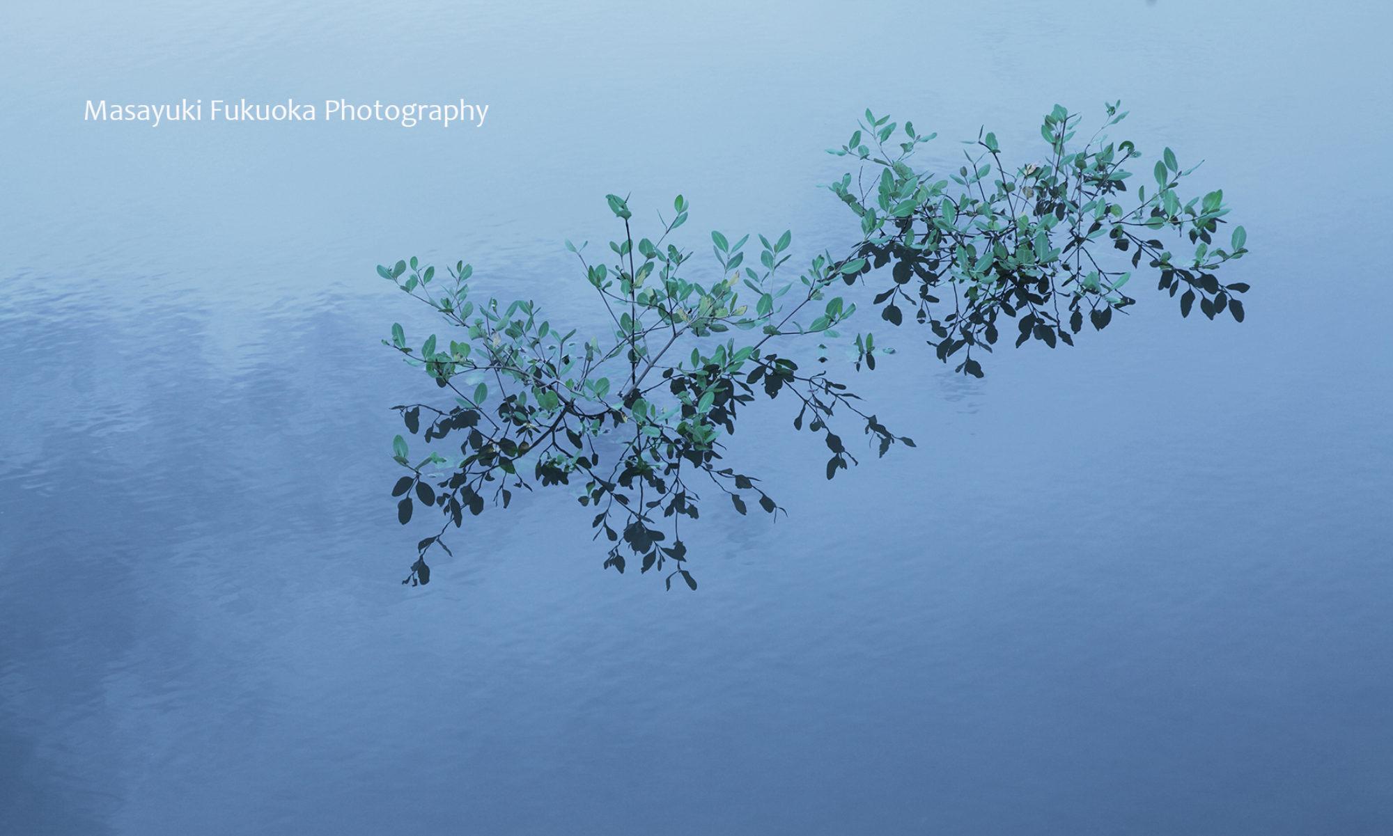 風景写真と花の写真 写真家・福岡将之 / Masayuki Fukuoka Photography
